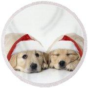 Golden Reriever Puppies, 7 Weeks Old Round Beach Towel