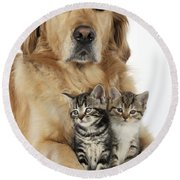Golden Retriever And Kittens Round Beach Towel