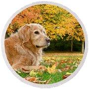Golden Retriever Dog Autumn Day Round Beach Towel