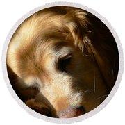 Golden Retriever Dog Sleeping In The Morning Light  Round Beach Towel by Jennie Marie Schell