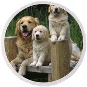 Golden Retriever Dog With Puppies Round Beach Towel