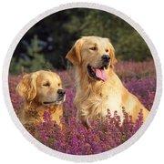 Golden Retriever Dogs In Heather Round Beach Towel