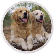 Golden Retriever Dogs Round Beach Towel