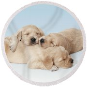 Golden Retriever Puppies Asleep Round Beach Towel