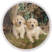 Golden Retriever Puppies In The Woods Round Beach Towel