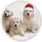 Golden Retriever Puppies With Christmas Round Beach Towel