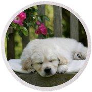 Golden Retriever Puppy Sleeping Round Beach Towel