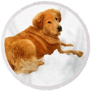 Golden Retriever Snowball Round Beach Towel by Christina Rollo