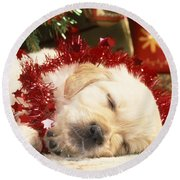 Golden Retriever Under Christmas Tree Round Beach Towel