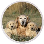 Golden Retriever With Puppies Round Beach Towel