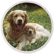 Golden Retrievers Dog And Puppy Round Beach Towel