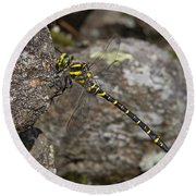 Golden-ringed Dragonfly Round Beach Towel