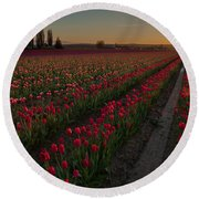 Golden Skagit Tulip Fields Round Beach Towel