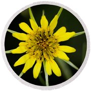 Golden Star Flower Yellow Salsify Glacier National Park Round Beach Towel