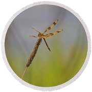 Golden Tailed Dragonfly Round Beach Towel