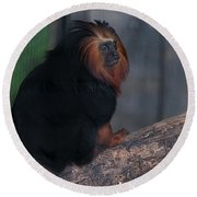 Golden Tamarin Round Beach Towel