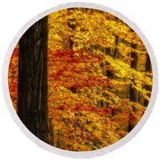Golden Trees Glowing Round Beach Towel