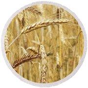Golden Wheat  Round Beach Towel