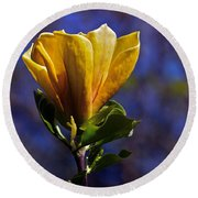 Golden Yellow Magnolia Blossom Round Beach Towel
