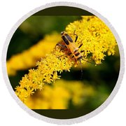 Goldenrod Beetle Round Beach Towel