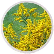 Goldenrod Flowers Round Beach Towel