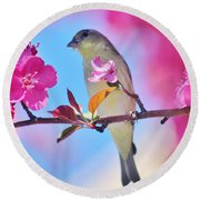 Goldfinch Behind Pink Blossoms 031015aaa Round Beach Towel