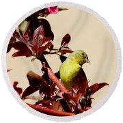 Goldfinch In Tree 031015a Round Beach Towel