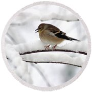 Goldfinch On Snowy Branches Round Beach Towel