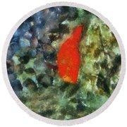 Goldfish Photo Art 05 Round Beach Towel