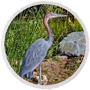 Goliath Heron By Water Round Beach Towel