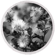 Gone To Seed Wild Aster Round Beach Towel