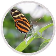 Good Morning Butterfly Round Beach Towel