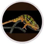 Good Night Chameleon Round Beach Towel