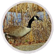 Goose On The Edge Round Beach Towel