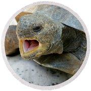 Gopher Tortoise Round Beach Towel