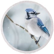 Gorgeous Blue Jay In The Snow Round Beach Towel