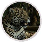 Gorgeous Jaguar Round Beach Towel