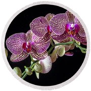 Gorgeous Orchids Round Beach Towel