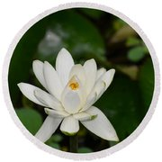 Gorgeous White Lotus Flower Blossom Round Beach Towel