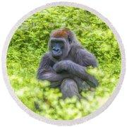 Gorilla Resting Round Beach Towel