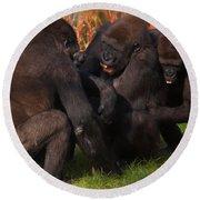 Gorillas Having Fun Together  Round Beach Towel