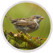 Gorrion House Sparrow Round Beach Towel