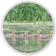 Goslings All In A Row Round Beach Towel