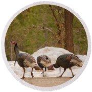 Gould's Wild Turkey V Round Beach Towel