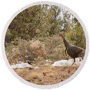 Gould's Wild Turkey Vii Round Beach Towel
