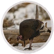 Gould's Wild Turkey Xi Round Beach Towel
