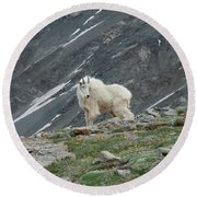 Gq Mtn. Goat Round Beach Towel