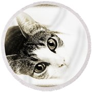 Grand Kitty Cuteness 3 High Key Round Beach Towel