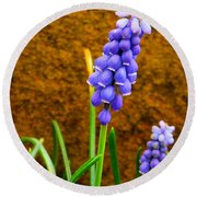 Grape Hyacinth And Sandstone  Round Beach Towel