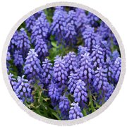 Grape Hyacinth At Thanksgiving Point - 1 Round Beach Towel